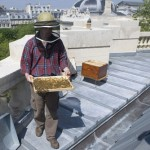RoofBees Paris